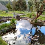 The Pond and the Garden