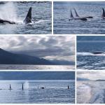 Discovery Marine Safaris Ltd. Foto