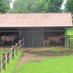 Photo of San Giacomo Horses