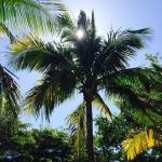 Foto de Pointe Estero Beach Resort