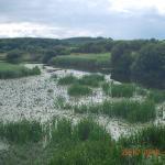 Lake of water lillies