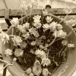 Plants on the balcony