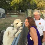 The Great Pyrenees dogs & Alpacas were very friendly!