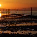 夕陽に染まる有明海と海床路 美しい姿だ。