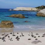 世界で唯一、近くに接近してアフリカペンギンを観察する事が出来ます。