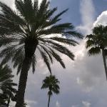 Foto de Hampton Inn & Suites Clearwater / St. Petersburg - Ulmerton Road
