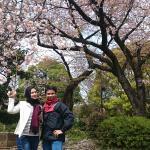Cherry Blossom menjadi latar belakang yang oke