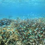 熱帯魚の群れが出迎えてくれるサンゴ礁の海