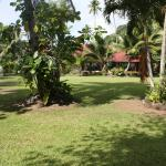 Le jardin vue 2