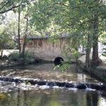 A beautiful stream inside the property
