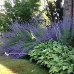 A small piece of the garden