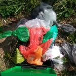 Overflowing dog waste.