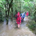 walking in a knee-deep water hole filled with eels