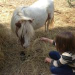 Visiting with the miniature horses