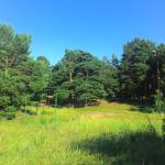 Krivinskiy Forest
