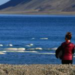 Belugas (photo taken by Noriko Fujii)