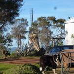Foto de The Lily Dutch Windmill