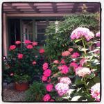 Ortensie fiorite nel cortile interno de Le Lasse Café