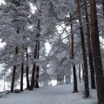 Snowy Väinölänniemi