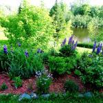 vue panoramique fleurs et lac de la terrasse