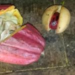 cocoa pod & beans, nutmeg fruit with nut covered by mace