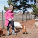 Feeding the chooks was a family highlight