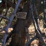 Hanging Tree at Vulture Gold Mine
