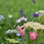 Takidani Hanashobu Garden Foto