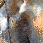 Elephant lady
