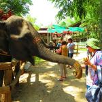 Feeding elephants with bananas