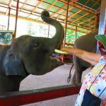 Feeding elephant baby with soya milk