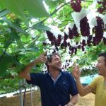 Ishihara Orchard