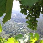 Photo de Vinho Verde Route