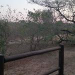 Foto de Nkambeni Safari Camp