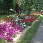 Visite au près la rose (3.07.15)