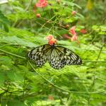 сад бабочек