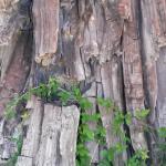 Uno dei tronchi