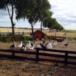 Photo de La Ferme des 3 Maillets