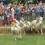 Come and visit for Sark Sheep Racing weekend