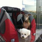 Ballades avec nos deux petites chiennes pendant toutes les vacances sur l'Ile de Ré