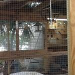 This shows the new animal cage with small critters.