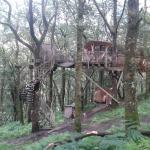 Penny treehouse
