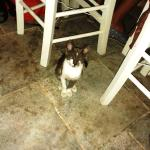 gatti in giro tra i tavoli