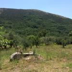Olive treed field behind the hotel