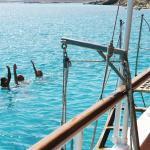 Rhenia island