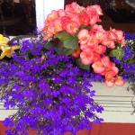 Their flowers were beautiful!