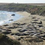 Elephant Seal Rookery - A must!