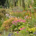 Herbaceous Border, August 2015