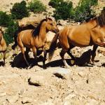 The Little Book Cliffs Wild Horse Area