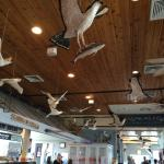 Wooden gulls swoop through the interior.